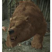 Boris (bear)