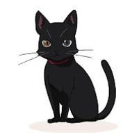 Image of Cammot (cat)